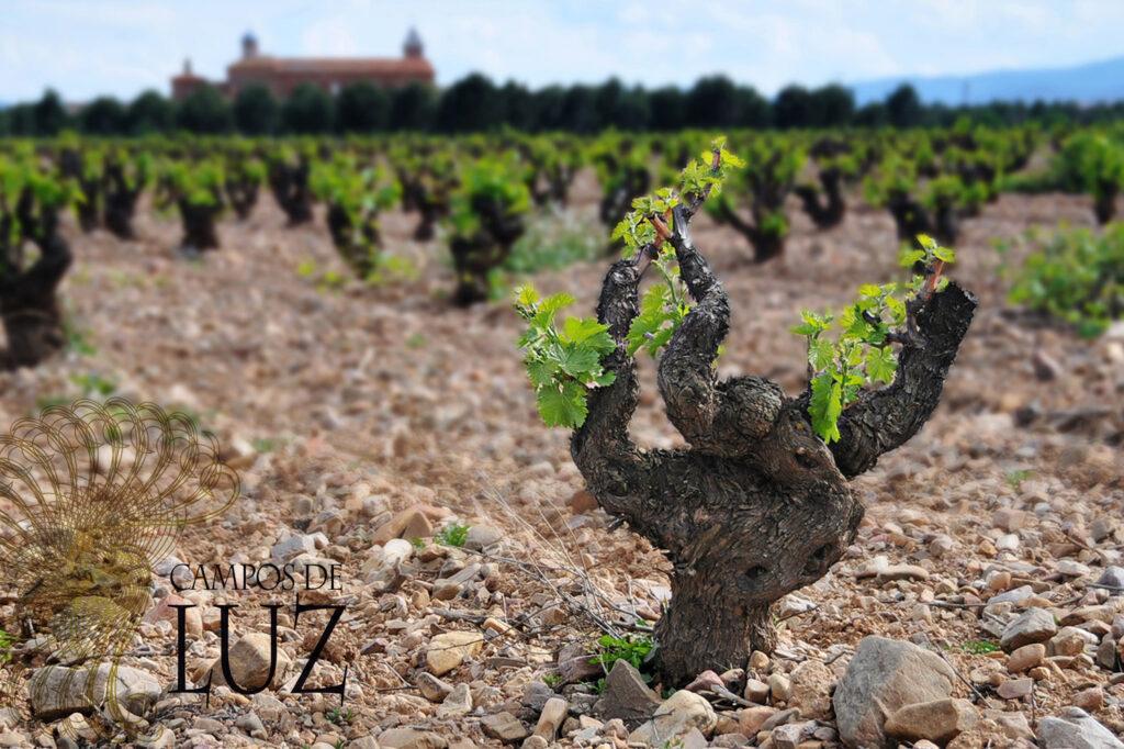 Campos de Luz (vineyard) 1