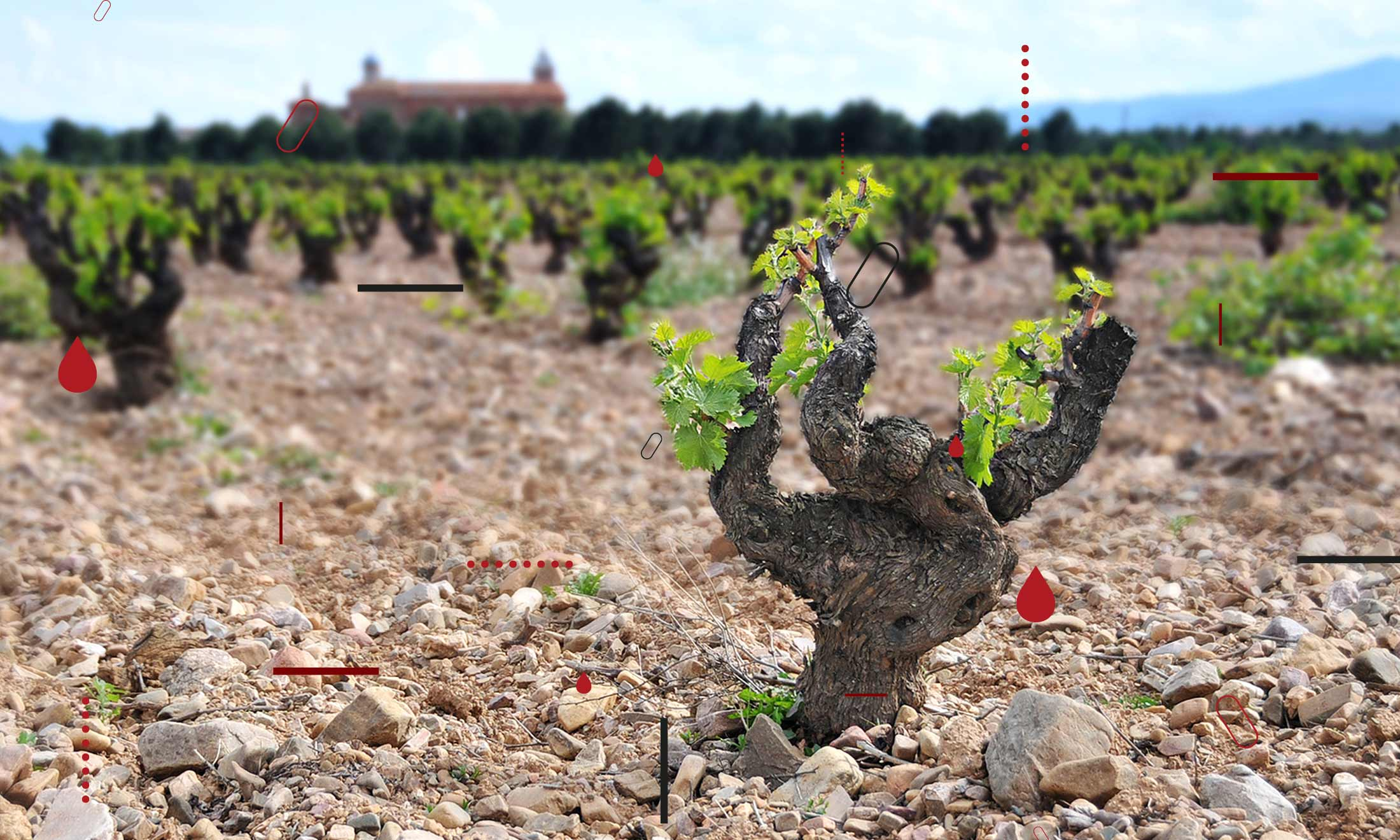 Vinergia Spanish Wines Campos de Luz Vineyard