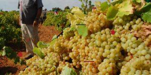 Vinergia Spanish Wines Viña Lolita Sparkling and organic Wine