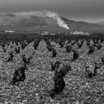 Campos de Luz (vineyard) 8