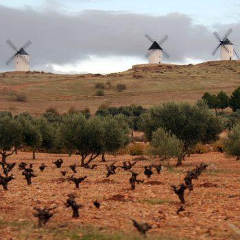 Windmills in winter