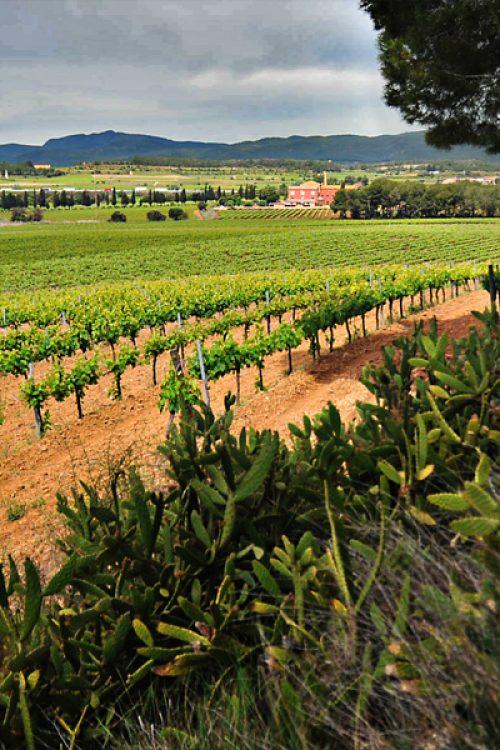 H Camps d'Estels vineyard